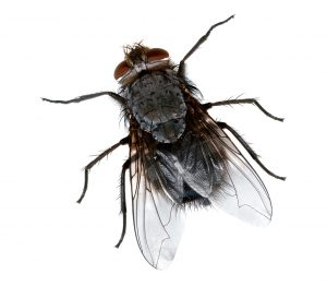Residential Pest Removal Tulsa