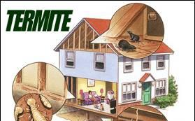 Termite Removal Tulsa OK